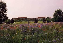 Prairie at Lucent Technologies Campus